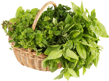 fresh herbs are used to vary the taste and because of the nutrients they add to this healthy broth
