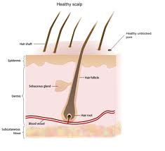 a dry, itchy scalp is uncomfortable and can be chronic