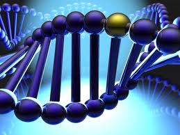 A telomere is an area of repetitive DNA at the end of chromosome which protects them from deteriorating and provoking aging.